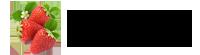 MYM Fidecilik | Çilek Fidesi Üretimi – MYM Fidecilik Tarım Ürünleri A.Ş